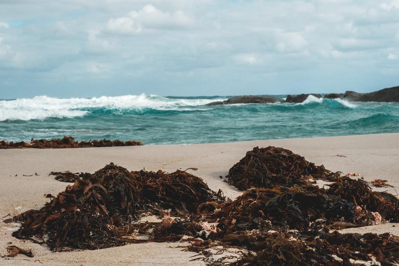 algues nourrissant puce de sables sur la plage